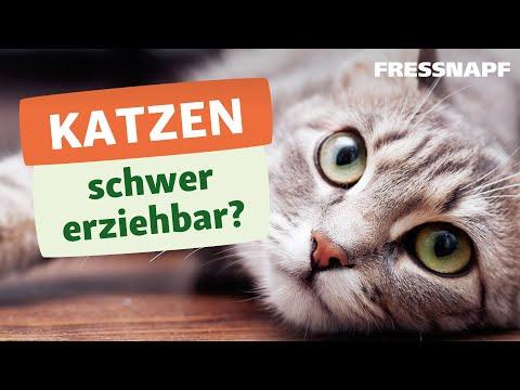 Warum sind Katzen so schwer erziehbar?