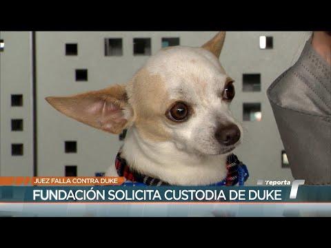 Apelan fallo de devolver a perro Duke a casa donde fue maltratado