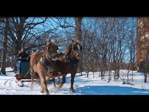 Apple Holler Horse-Drawn Sleigh Ride