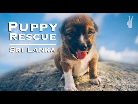 Saving a Puppy in Sri Lanka's Surf Capital | Mirissa & Galle Travel Guide
