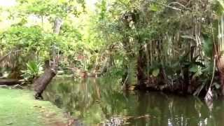 Pamplemouses Botanical Garden in Mauritius