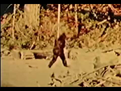 A very neat footage of Bigfoot captured by Patterson-Gimlin.