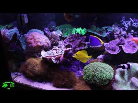 Bigs Als Reef tank Toronto
