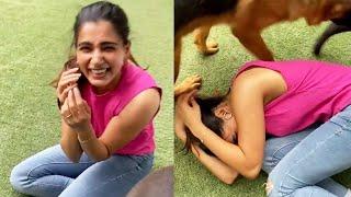 Samantha Akkineni Playing With Her Pet Dogs In Quarantine Time | Samantha Latest News - RAJSHRITELUGU