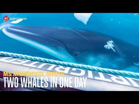 Two whales in one day