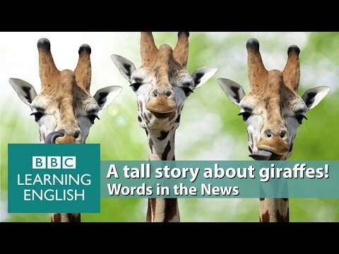 The secret of giraffes' long legs. Learn: spindly, hindrance, evolutionary, modestly proportioned