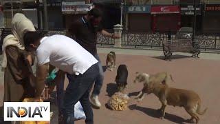 COVID lockdown: Team of animal lovers feed street dogs in Srinagar - INDIATV
