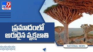 Socotra's 'dragon's blood' trees under threat - TV9 - TV9