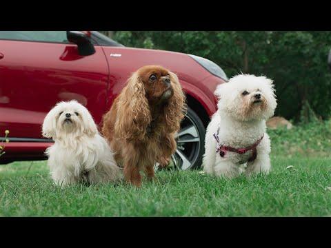 Ford Puma - Mega-Pups - Puppy-Pampering Pop-Up