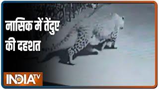 Nashik: दबे पांव तेंदुआ घर में घुसा और कुत्ते को बना डाला शिकार, घटना CCTV में कैद - INDIATV