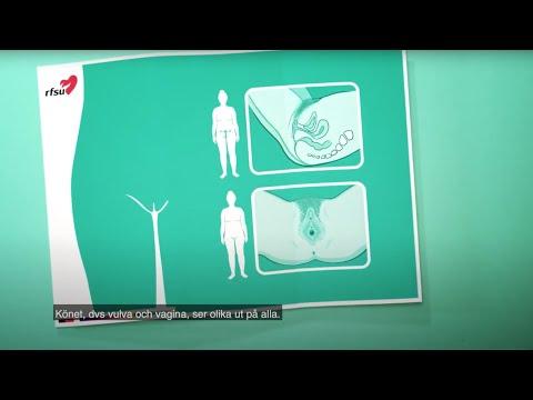 Zayenda jinê   RFSU informerar om kvinnans kön på kurmanji (nordkurdiska)