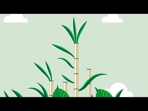 TePe GOOD Sugarcanes