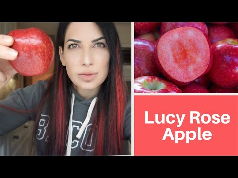 Tasting Lucy Rose Apple
