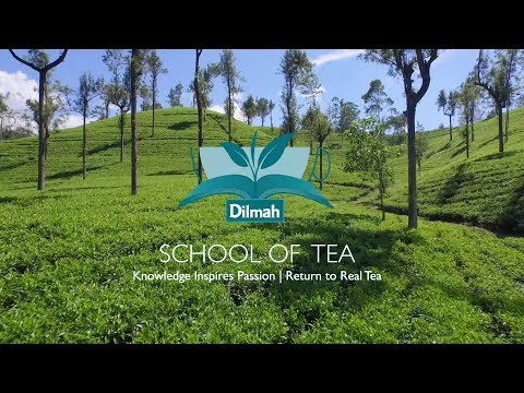 Introduktion till Dilmah School Of Tea