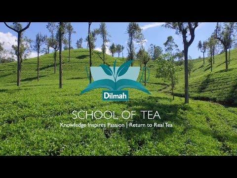 Introduktion till Dilmah School Of Tea