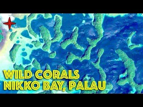 Exploring Palau's Fantastic Niko Bay