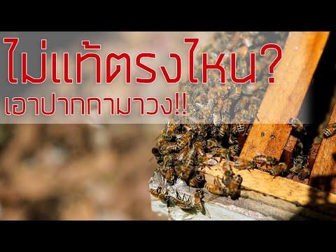 น้ำผึ้งไม่แท้ตรงไหน-เอาปากกามา