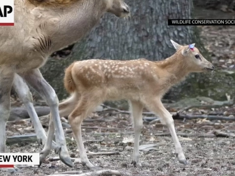 It's Friday: Time for Baby Deer