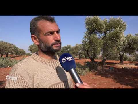 التحطيب لأجل الدفىء يهدد الأشجار المثمرة بريف حلب