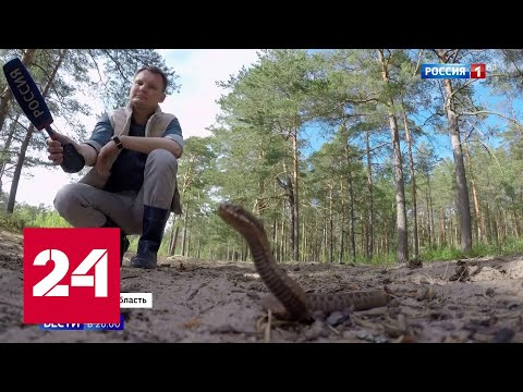 В Ленинградской области нашествие гадюк