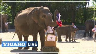 La France championne de l'Euro  Cet éléphant prédit la victoire des Bleus ????