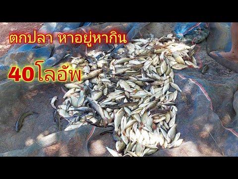 หาปลา-กินข้าวป่า-วิถีชีวิตแบบบ