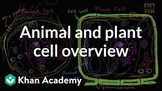 Overview of animal and plant cells
