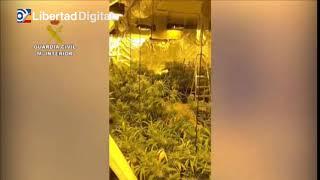 Descubiertas 800 plantas de marihuana en una vivienda unifamiliar de la zona norte de Madrid