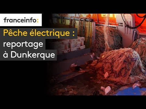 connectYoutube - Pêche électrique : reportage à Dunkerque