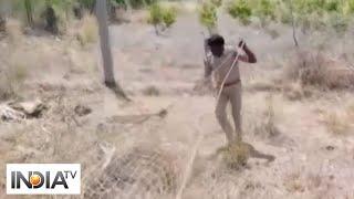 Forest officials rescue leopard in Telangana's Nalgonda - INDIATV