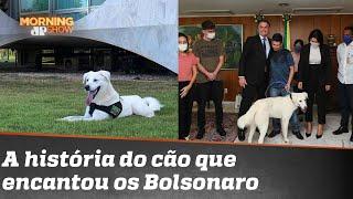 Pêlo em ovo A história de Augusto, ou Zeus, o cão que encantou os Bolsonaro