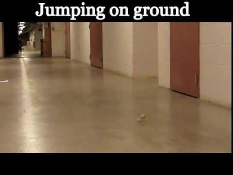 Bio-inspired Miniature Steerable Jumping Robot