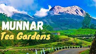 Amazing Munnar Drive Teagarden Landscape kerala India