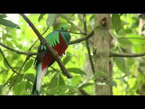 País retoma turismo de aves