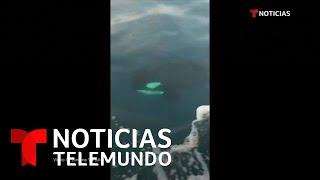 El histórico avistamiento de tres orcas en el sur de Italia   Noticias Telemundo