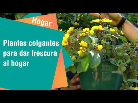 Plantas colgantes de interior y exterior | Hogar