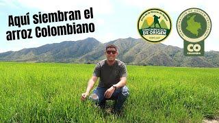El paisaje mas HERMOSO que he visto en Colombia ???? Finca de Arroz en Ibagué