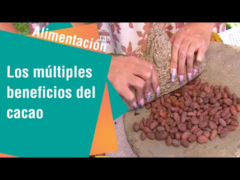 Cacao negro: Moneda antigua y alimento de los Dioses   Alimentación Sana