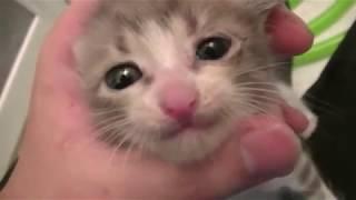 子猫 拾いたい『【子猫】捨て猫がいたので水責めしてみた I picked up the abandoned kitty and tried wetting』などなど