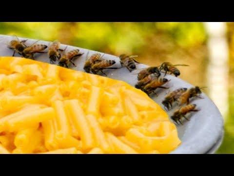 mac n bees