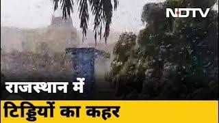 Rajasthan में Jaipur से दौसा पहुंचा टिड्डियों का दल, फसलों को पहुंचा रहा है नुकसान - NDTVINDIA