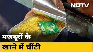 Chhattisgarh: Bilaspur में मजदूरों के खाने में मिलीं चीटियां - NDTVINDIA