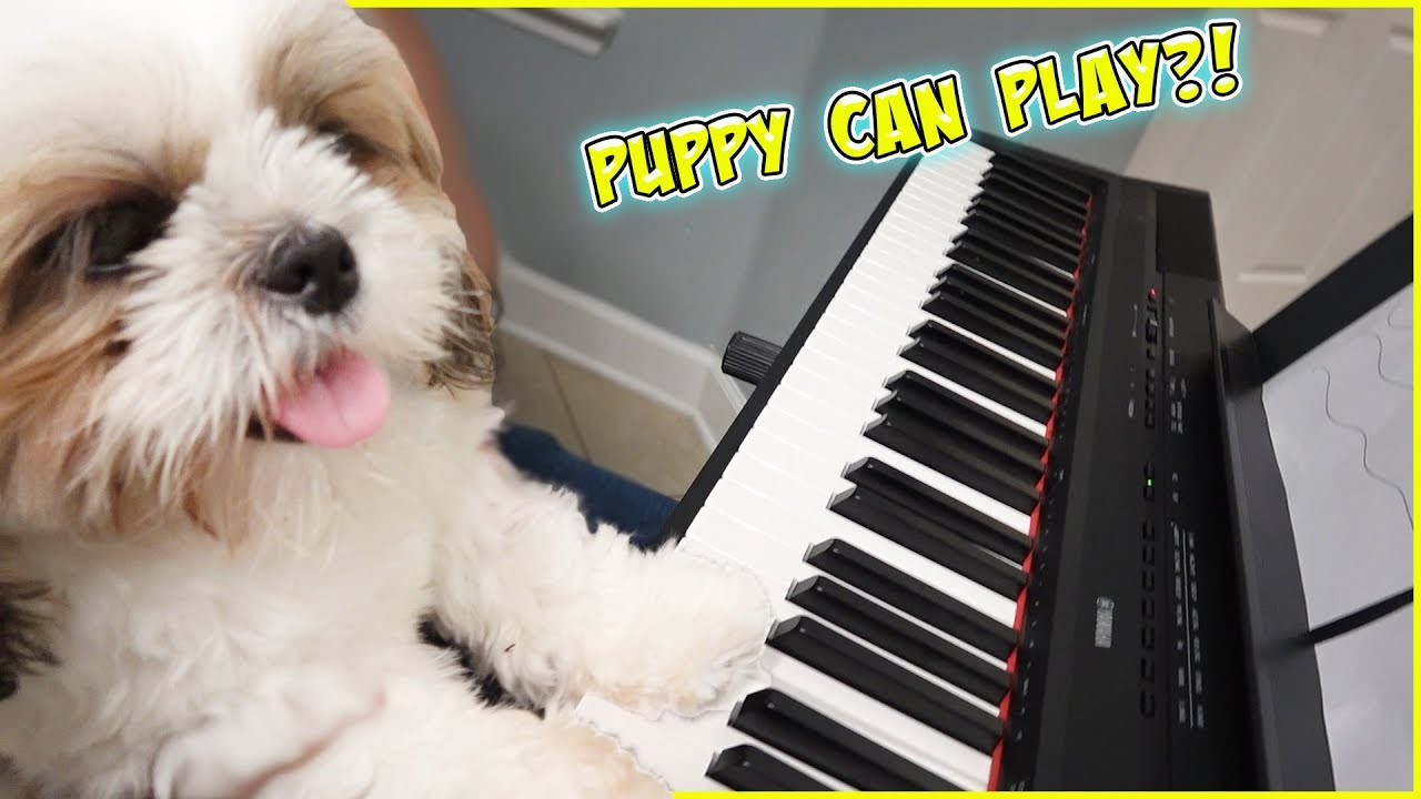 MIRACLE PUPPY PLAYS PIANO!!