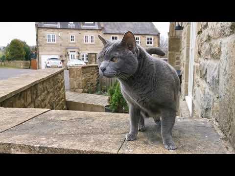 แมวสำรวจหน้าบ้าน,--ท่าของแมวมา