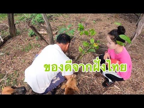 ต้นไม้หายากจากฝั่งไทยพ่อดีใจจน