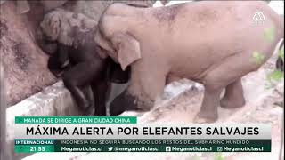 Manada de elefantes se dirige a gran ciudad de China