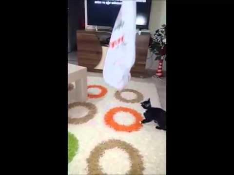 bagged funny kitten