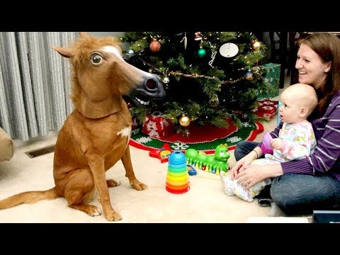connectYoutube - ANIMAL REACTIONS to CHRISTMAS GIFTS are even FUNNIER THAN KID REACTIONS - Funny compilation