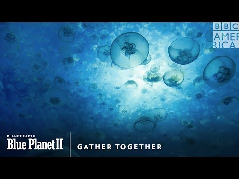 Gather Together | Planet Earth: Blue Planet II | Sat., January 20 @ 9/8c on BBC America