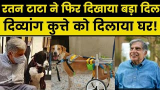 Ratan Tata helps paralysed stray Dog to find a forever Home, shares post on Instagram, रतन टाटा - ITVNEWSINDIA